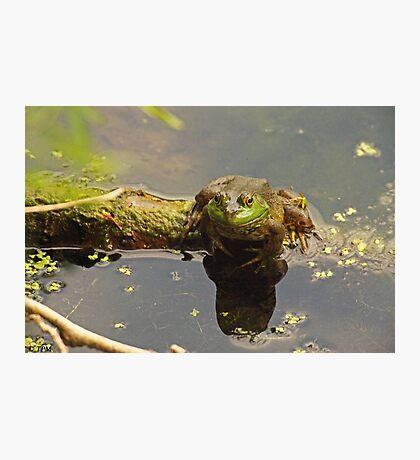 Frog February Photographic Print