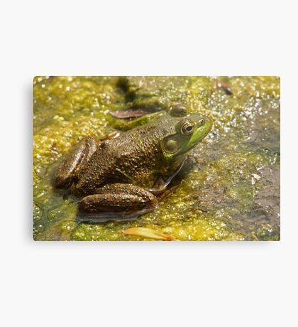 Frog March Metal Print