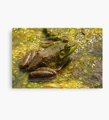 Frog March Canvas Print