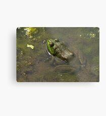 Frog April Metal Print