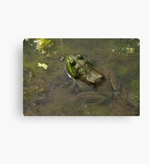 Frog April Canvas Print
