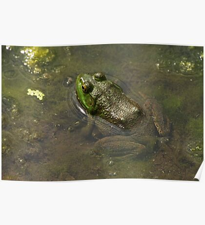Frog April Poster