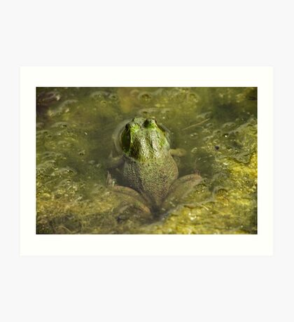 Frog May Art Print
