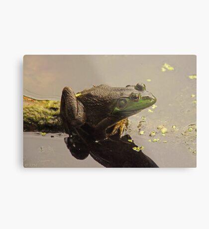 Frog June Metal Print