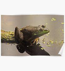 Frog June Poster