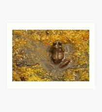 Frog July Art Print