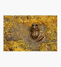 Frog July Photographic Print