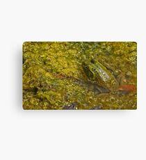 Frog November Canvas Print