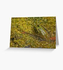Frog November Greeting Card