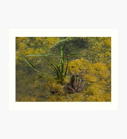 Frog December Art Print