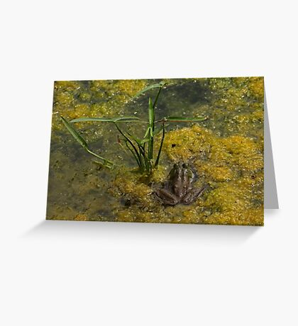 Frog December Greeting Card