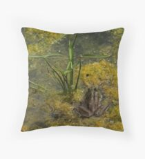 Frog December Throw Pillow