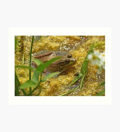 Frog August II Art Print