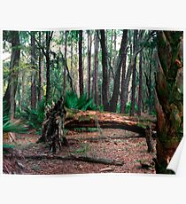 Fallen Oak.  Poster
