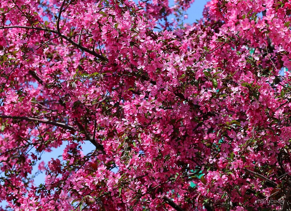 Pink Spring 5 by marybedy