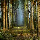 Morning Mist . by Irene  Burdell