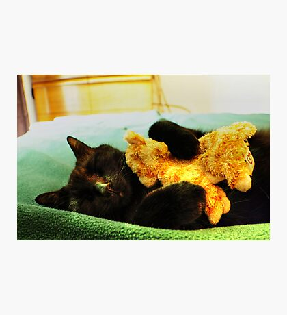 Maui the Cat (aka-Booky) Sleeping With His Baby Kitten, Stuffed Animal Photographic Print
