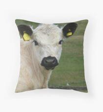 A beautiful rare breed calf Throw Pillow