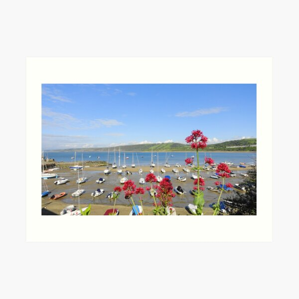New Quay Harbour Wales Art Print