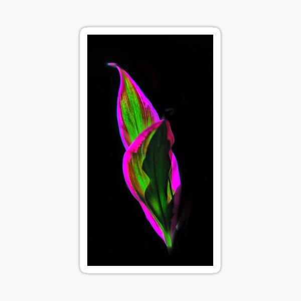 luminous Sticker