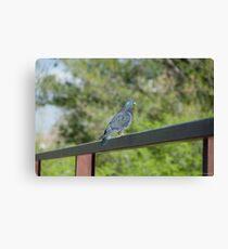 Bird sitting on railing Canvas Print