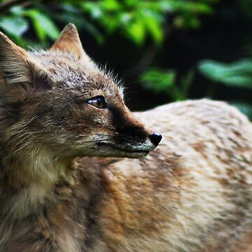 Corsac Fox by TheCroc1979