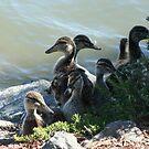 Family Photo by pandabear510