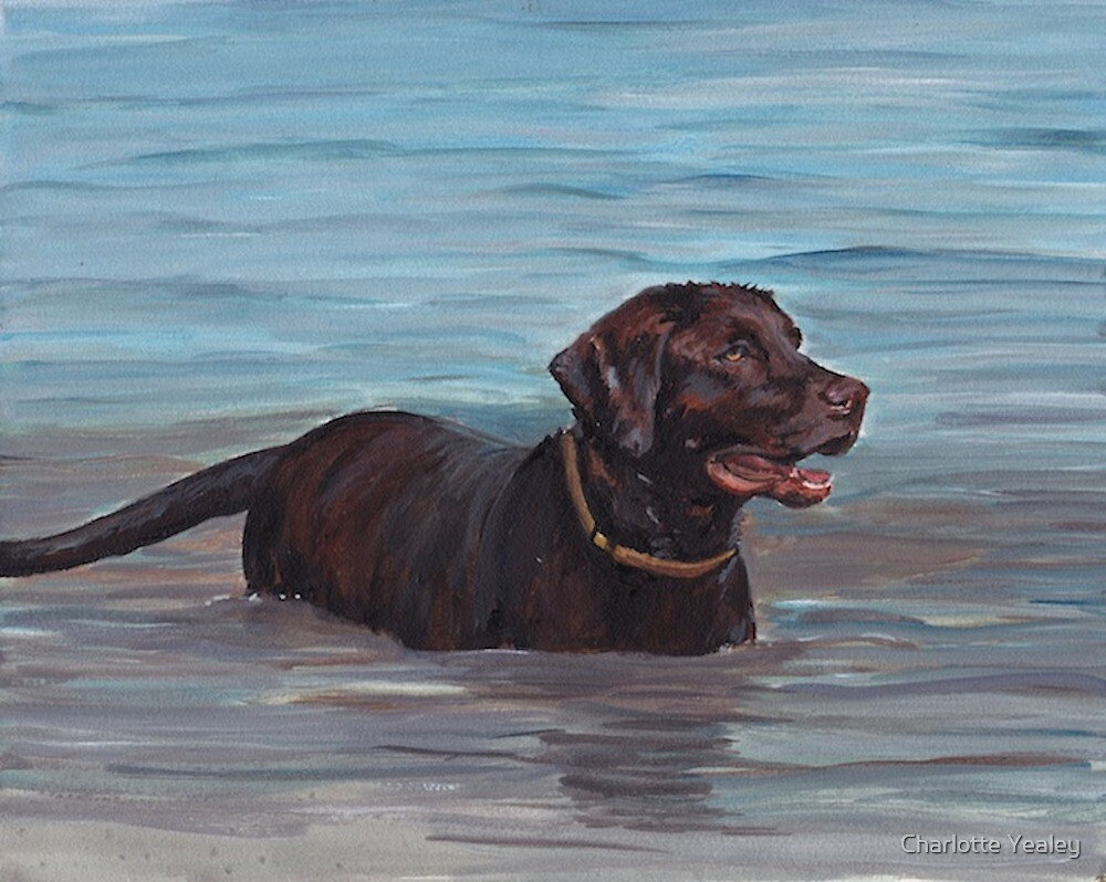 Chocolate Labrador Retriever by Charlotte Yealey