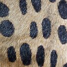 Leopard Print by Scott Mitchell