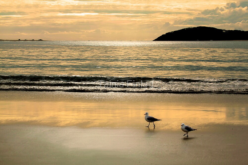 Fingal Bay Dawn by Tainia Finlay