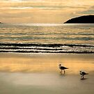 Fingal Bay Dawn by Tainia Finlay
