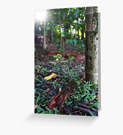 Leaf litter at City Botanic Gardens Greeting Card