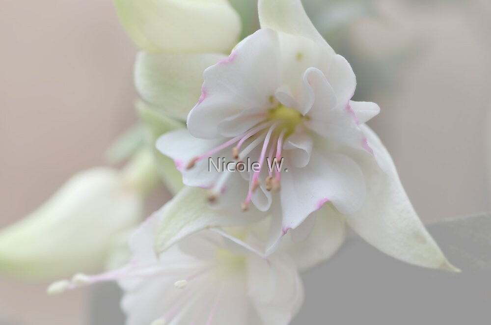 Hot white by Nicole W.