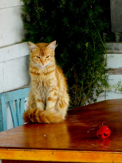Kitty Pepper by Al Bourassa