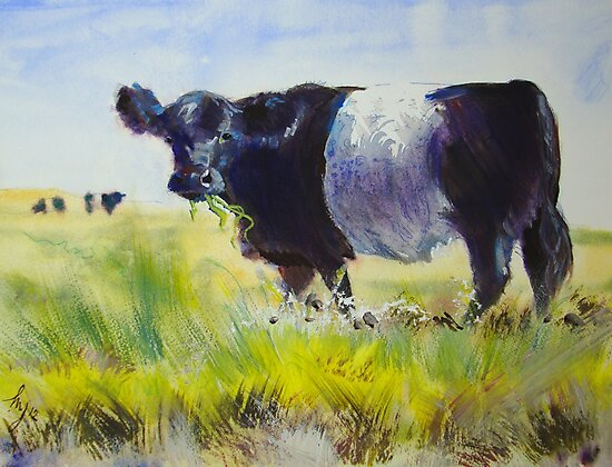 Galloway Cow Print