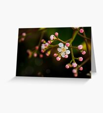 Apple Blossom. Maybe. Greeting Card