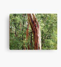 Red Bark Canvas Print