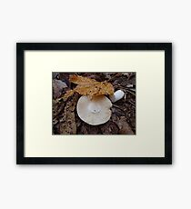 Cappy Framed Print