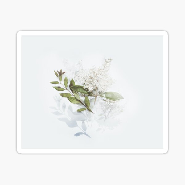 Green leafted plant with white flowers  Sticker