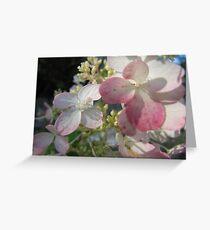 Pale Pink Greeting Card
