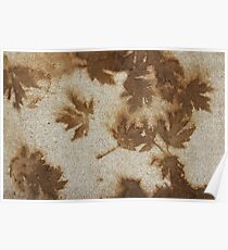 Brown maple leaf stains  Poster