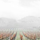 Misty Vineyard by yorgi