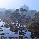 Misty morning swamp reflections by Ian Berry