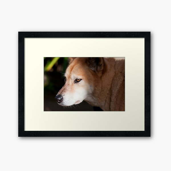 A penny for his thoughts Framed Art Print