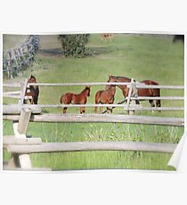 Yearlings Poster