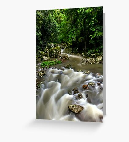Cave Creek - Springbrook National Park Greeting Card