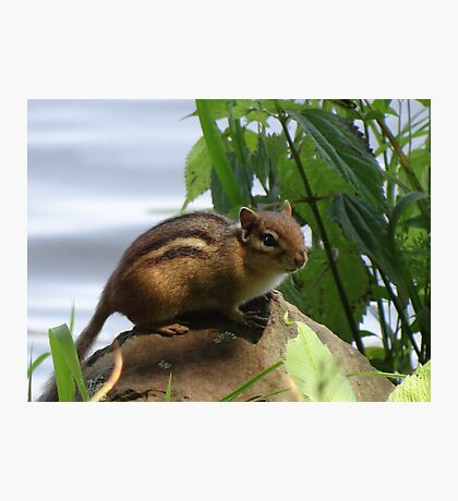 Young ChipnDale Photographic Print