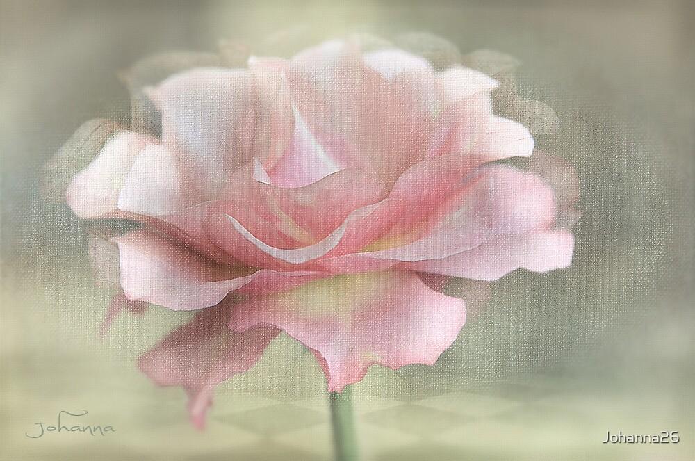 A rose named Karen  by Johanna26