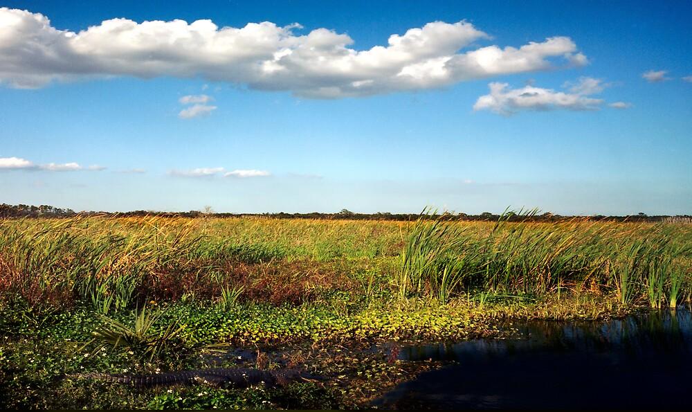 Alligator on Floodplain. Wetlands Park. by chris kusik