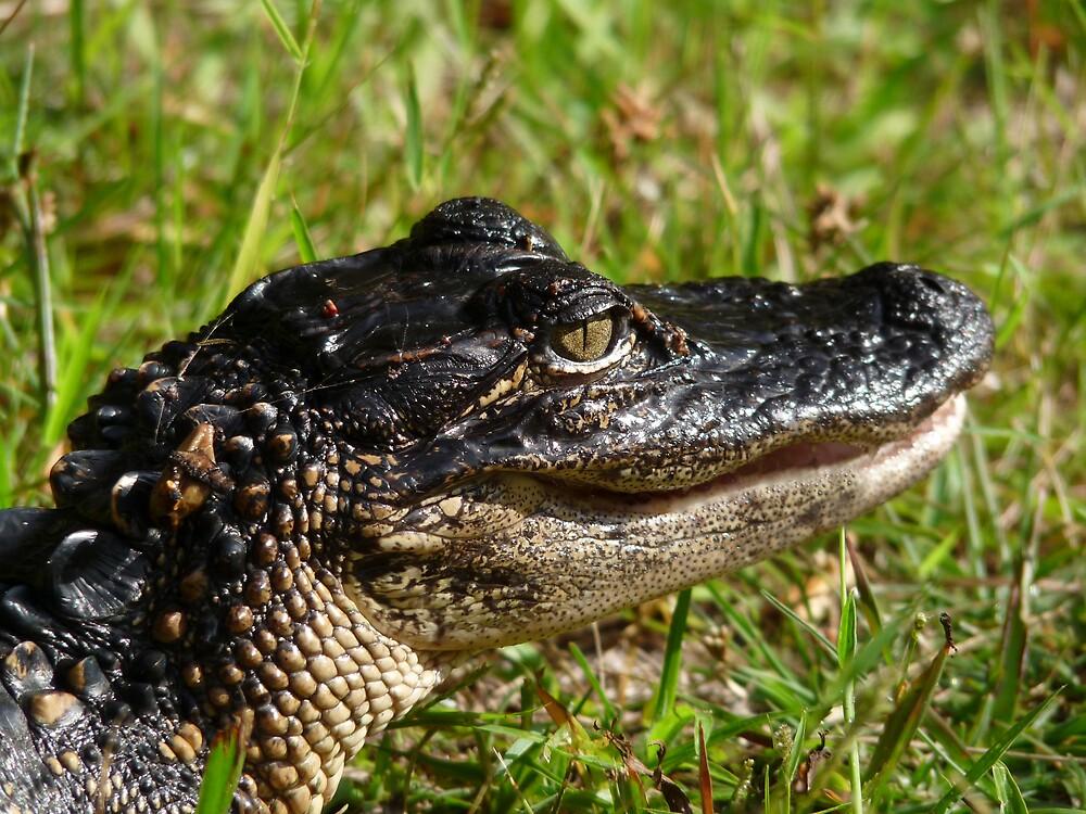 Alligator Portrait #2. Melbourne Shores. by chris kusik